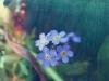 фото цветов  april182