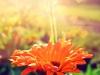 фотографии  цветов  april182