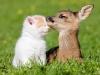 Дружба между животными