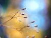 летние цветы Healzo