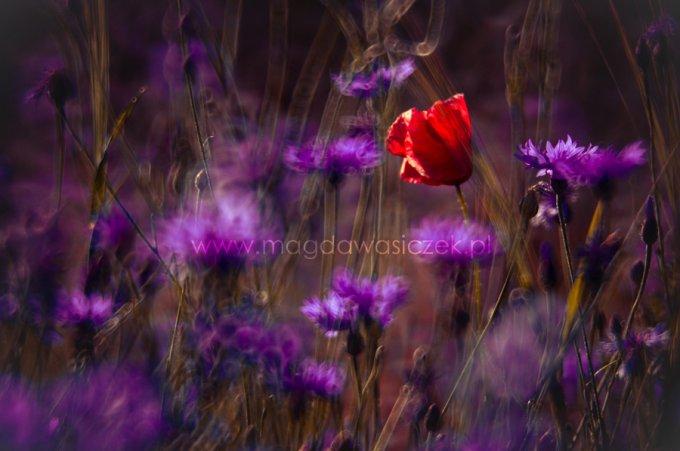 фотографии цветов Magda Wasiczek