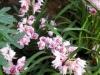 Выставка орхидей в Аптекарском огороде