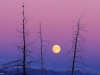 patohara_yellowstone-moonrise