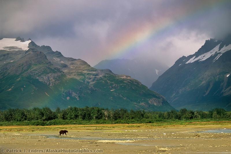 Животный мир Севера от Patrick Enders