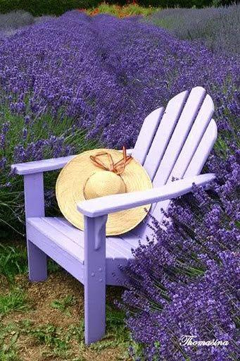фиолетовые цветы на фото