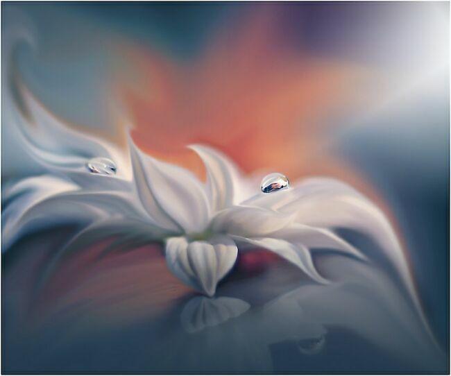 цветы с каплями росы