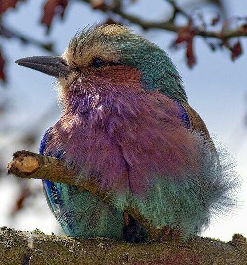фиолетовая птица