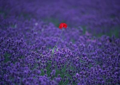 фото луговых и полевых цветов