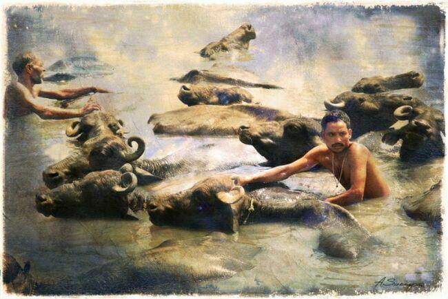слоны Индии картинки