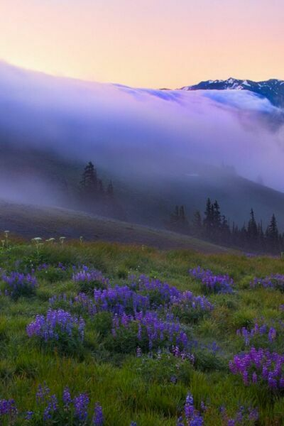 фиолетовый туман на фото