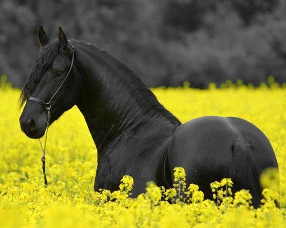 фото лошади в желтых цветах
