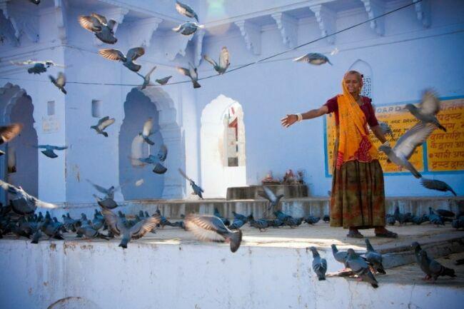 индия девушки картинки голуби
