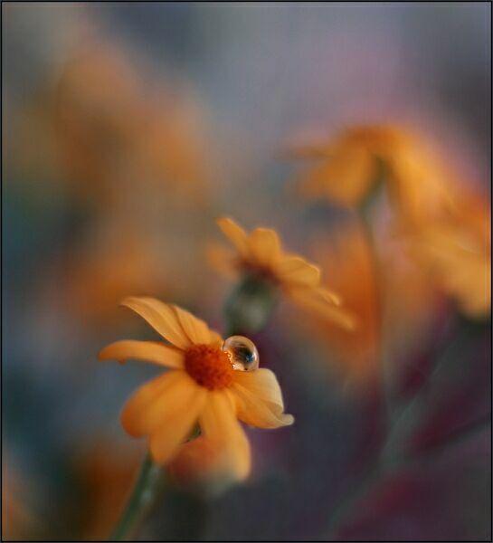 капли на цветах фото
