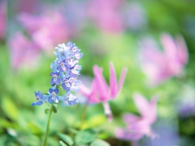 7_cvetuhie poliani
