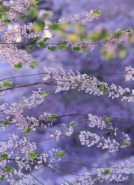 светло-фиолетовые цвет на фото