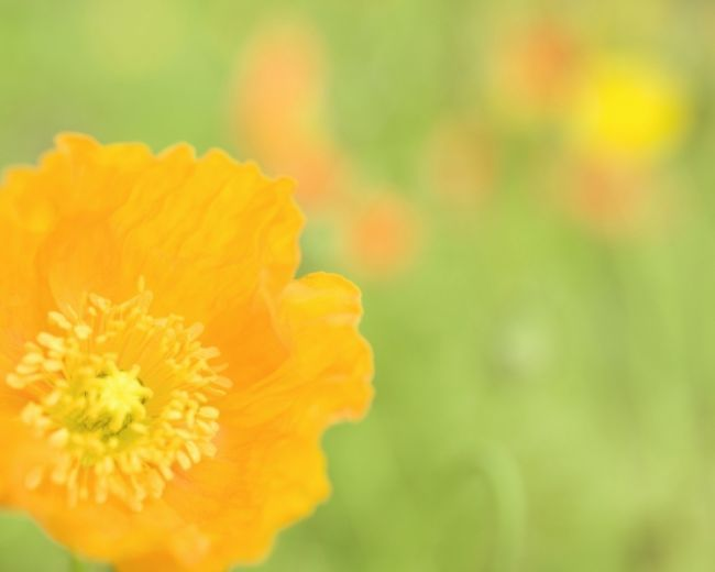 8_cvetuhie poliani