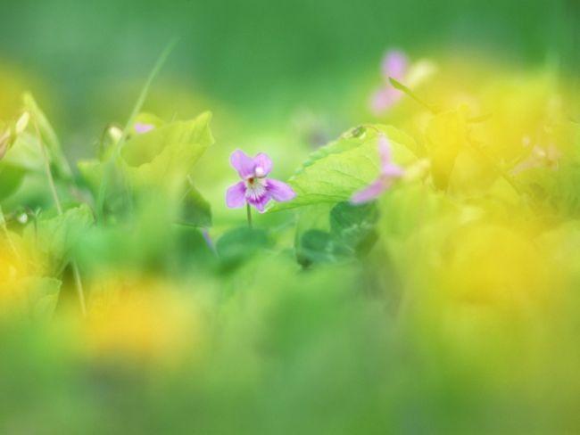 9_cvetuhie poliani