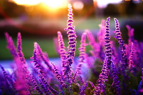 в моем блоге фотографии цветов