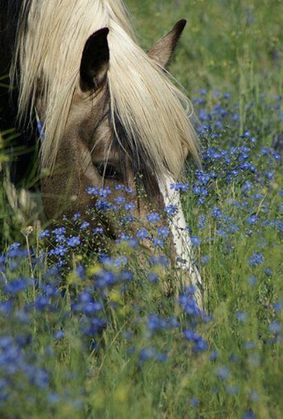 лошадь среди полевых цветов