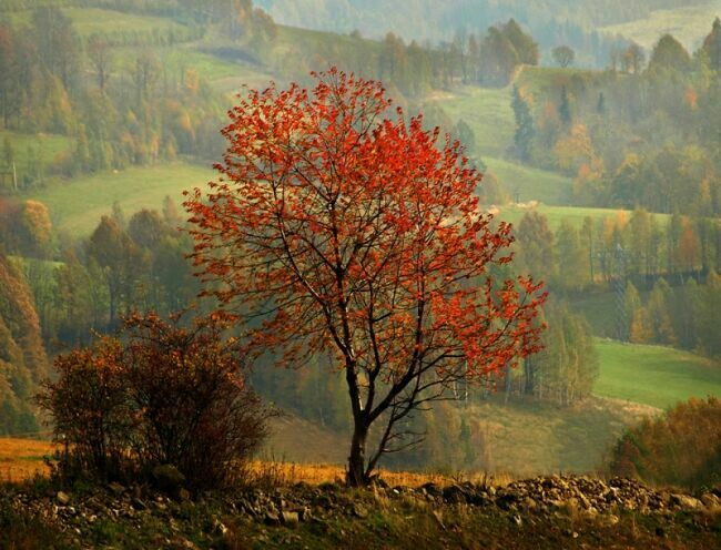 Осенний пейзаж на фото