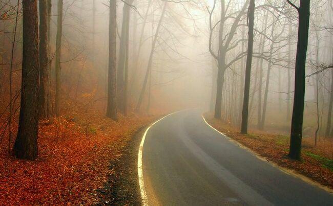 Октябрь картинки леса