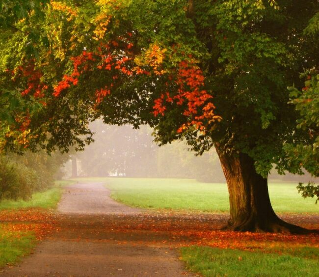скоро осень за окнами август