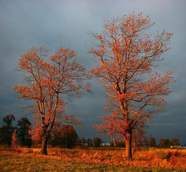 осень фото природа