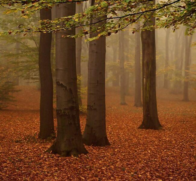 лес осенью фото