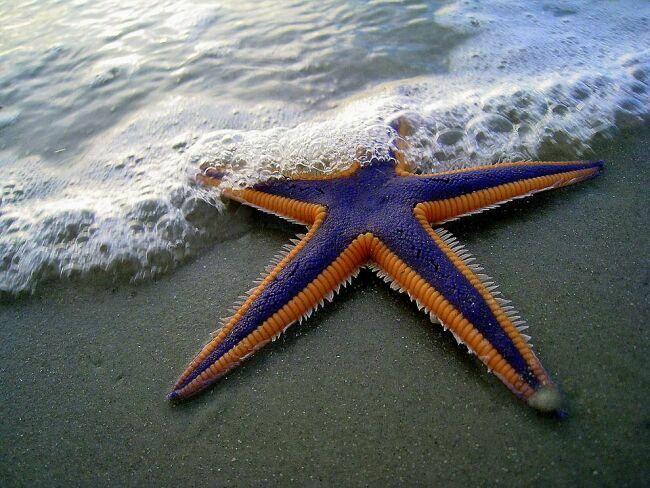 картинки морские звезды