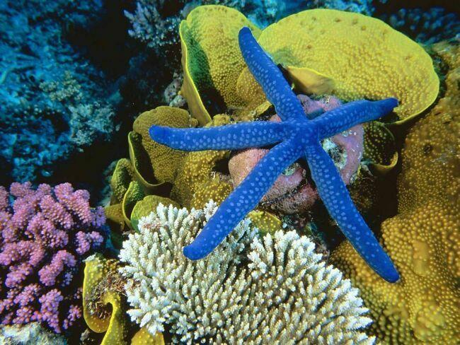 фото и картинки морской звезды