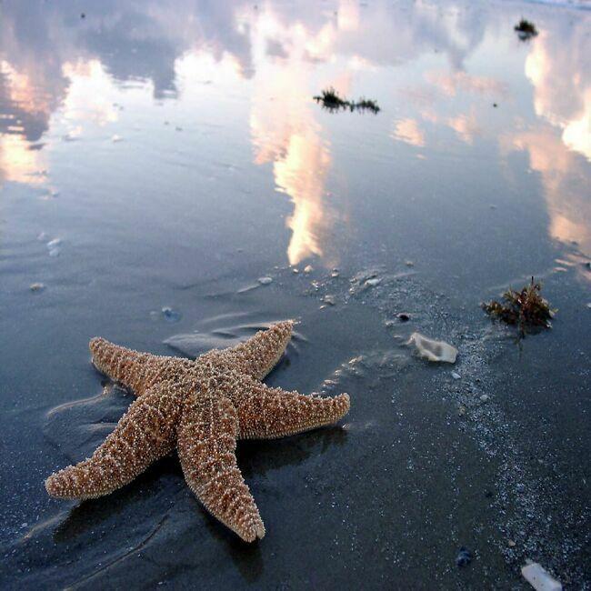 фотографии морской звезды
