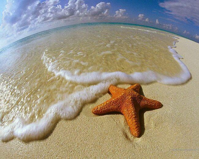 морские звезды на фото