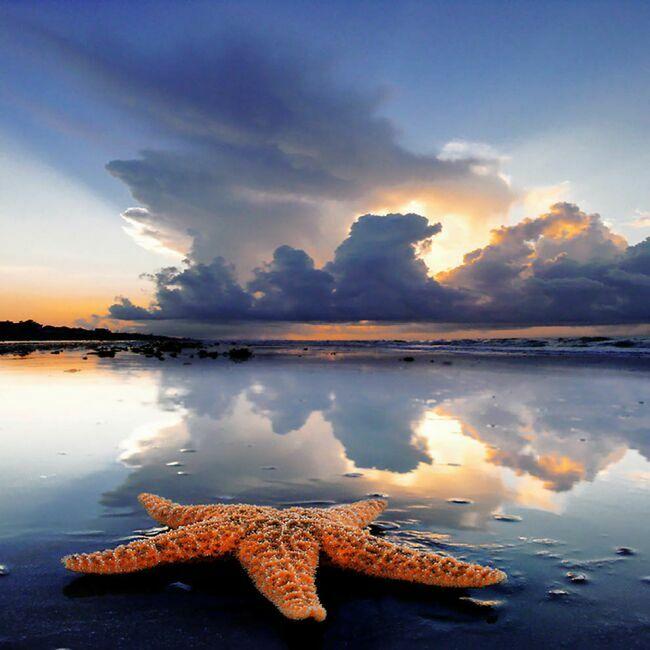 морские звезды_5
