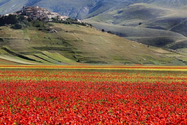 Пейзажи с маками в Италии