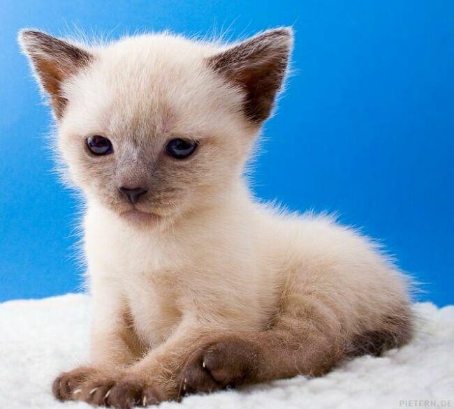 самые позитивные фото котят