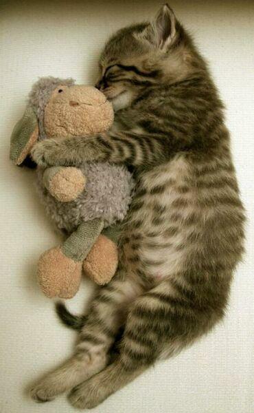 ласка кошки на фото