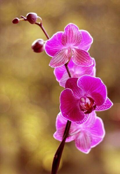 цветы орхидеи на фото