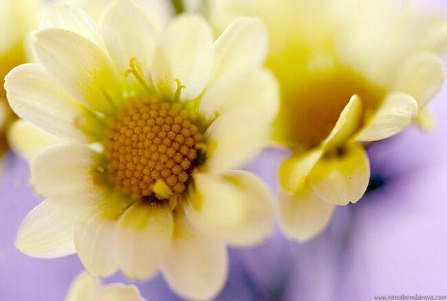 цветы садовые на фото