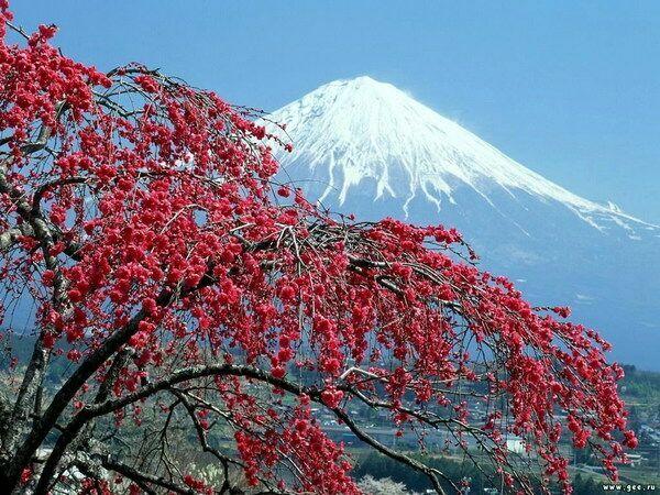 Фудзи весной