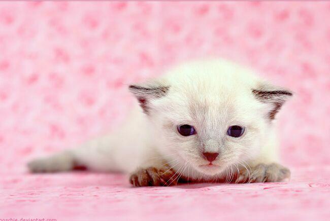 позитивное фото белого котенка