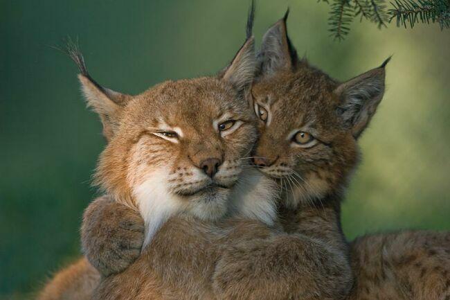 ласка картинки животных