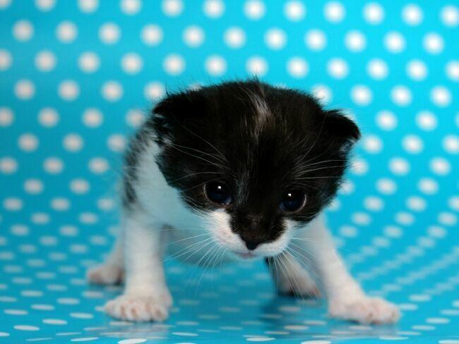 позитивные фото котят