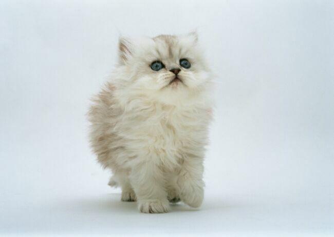 позитивные фотографии кошек