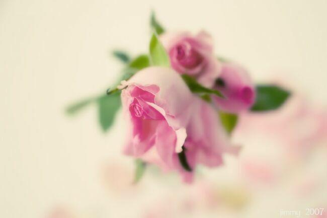 акварельные цветы Jimmy Grass.
