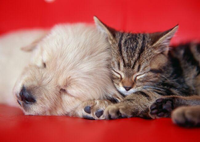 позитивные фото с кошкой и собакой