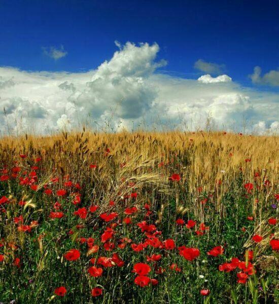 красивые летние пейзажи фото