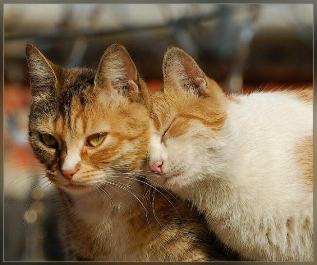 ласка кошек фото