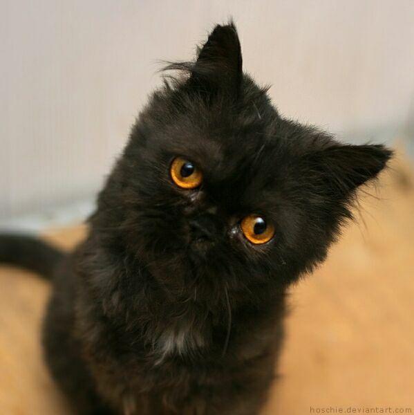 черный котенок позитивный