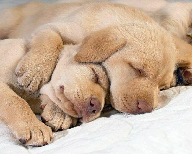 ласка фото собак