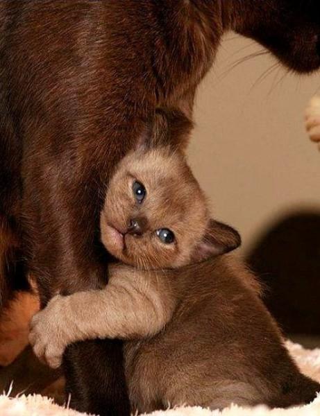 Ласковый котенок